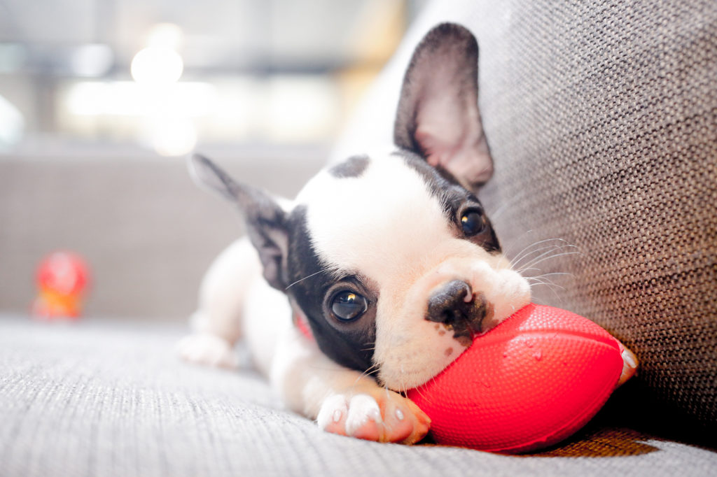 Pet & Puppy Home Visits Worcester